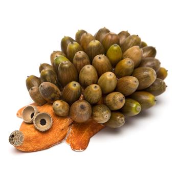 jesenski ježek